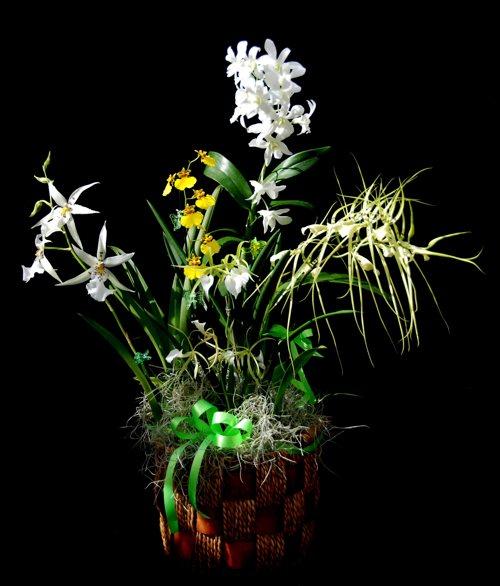 Ke Aloha (Beloved) 5 Orchid Gift Basket