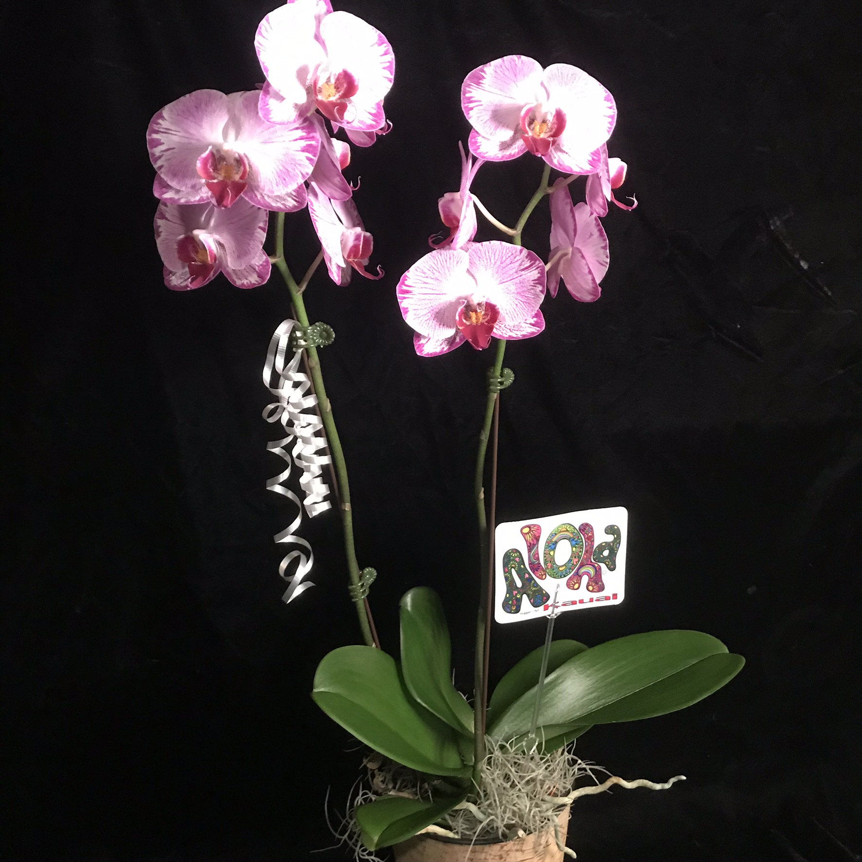 Grower's Choice Double (2) Orchid Gift Basket