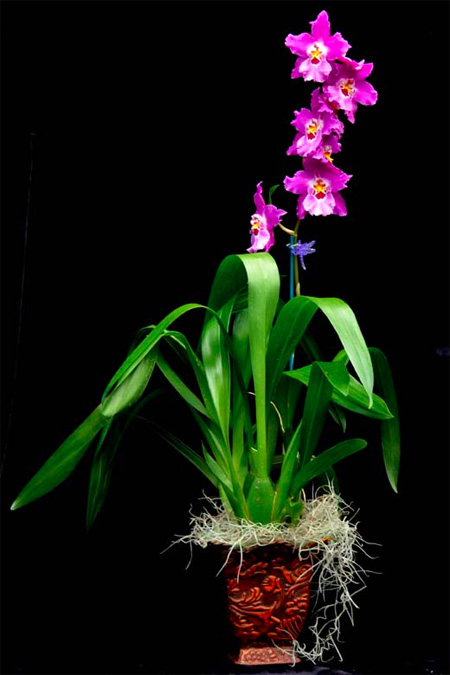 Grower's Choice Single (1) Orchid Gift Basket