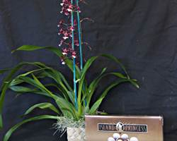 Chocolate Delight Orchid Gift Basket