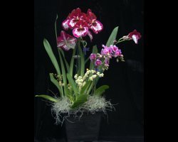 Grower's Choice Triple (3) Orchid Gift Basket