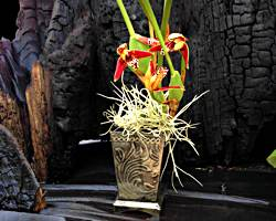 Coconut Orchid Gift Basket