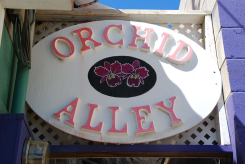 Orchid Alley About Us